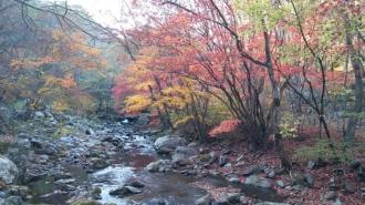 백천마을 가을단풍