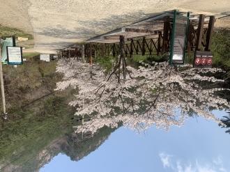 백천명품마을 봄